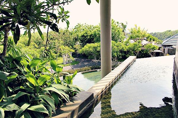 Banyan Tree - eine grüne Oase